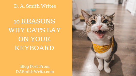 10 Reasons Why Cats Lay On Your Keyboard While You're Typing (Humor)